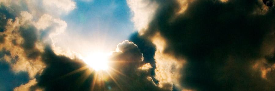 In che modo la temperatura dell'aria influisce sulle piante