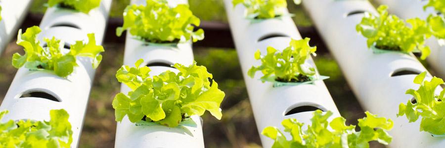 Coltivazione fuori suolo – perché è un buon metodo di coltivo?