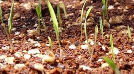 Fibra di cocco: le più comuni tipologie e le sue applicazioni