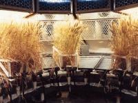 La coltivazione idroponica in breve